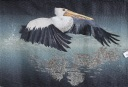 Night Flight by Suzanne Wray; Judges Choice
